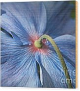 Behind The Blue Poppy Wood Print