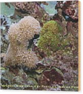 Beige And Green Star Corals Wood Print