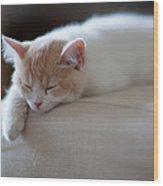 Beige And White Kitten Sleeping On Wood Print