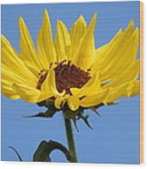 Bright Yellow Happy Sunshine Wood Print