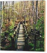 Belfast Trail Wood Print