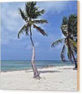 Beautiful Belize Palms Wood Print