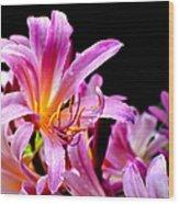 Belladonna Lilies Wood Print