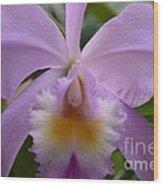 Belle Isle Orchid Wood Print