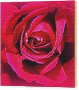 Belle Rose Rouge Wood Print