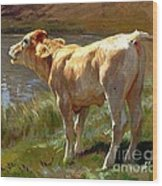 Bellowing Cow Wood Print