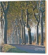Beloved Plane Trees Wood Print