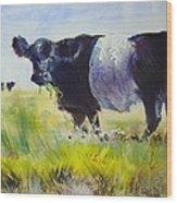 Belted Galloway Cow Wood Print