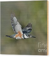 Belted Kigfisher Female Flying Wood Print