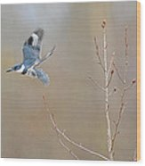 Belted Kingfisher 3 Wood Print