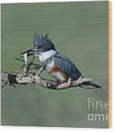 Belted Kingfisher Hen With Fish Wood Print