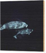Beluga Pod Wood Print