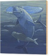 Beluga Whales Swimming As A Pod Wood Print
