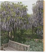 Bench And Wisteria Wood Print