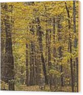Bench In Fall Color Wood Print