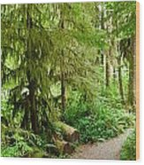 Bend In The Rainforest Wood Print