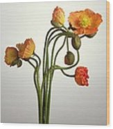 Bendy Poppies Wood Print
