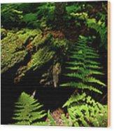 Beneath The Trees - Blue Ridge Mountains Wood Print