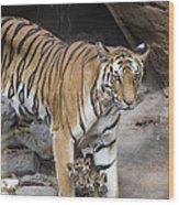 Bengal Tiger And Cubs Bandhavgarh Np Wood Print