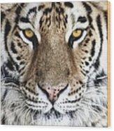 Bengal Tiger Eyes Wood Print