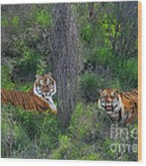 Bengal Tigers On Grassy Hillside Endangered Species Wildlife Rescue Wood Print