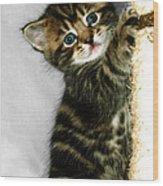 Benny The Kitten Playing Wood Print
