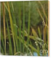 Bent Grass Variation In Nature Wood Print