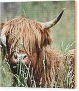 Bent Horn Long Horn Wood Print