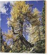 Bent Tree Wood Print