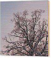 Bergen  Winter Tree Wood Print by Hakon Soreide