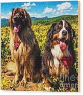 Bernese Mountain Dog And Leonberger Among Wildflowers Wood Print