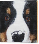 Bernese Mountain Dog - Baby It's Cold Outside Wood Print