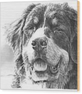 Bernese Mountain Dog Pencil Portrait Wood Print