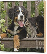 Bernese Mountain Puppy & Kitten Wood Print