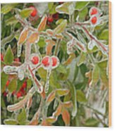 Winter Berries On Ice Wood Print