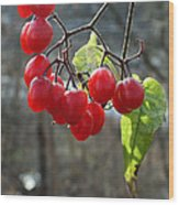 Berries In Winter Wood Print