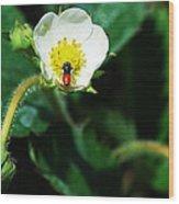 #berry Wood Print