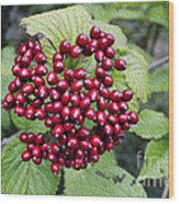 Berry Blast Wood Print