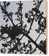 Berry Bush Wood Print
