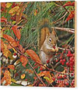 Berry Loving Squirrel Wood Print