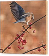Berry Picking Bluebird Wood Print
