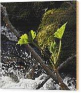 Beside The Waterfall Wood Print