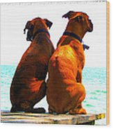 Best Friends Dog Photograph Fine Art Print Wood Print