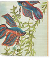 Betta Splendens Wood Print