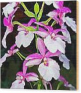 'betty' Orchid Wood Print