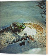 Between A Frog And A Hard Place Wood Print
