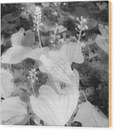 Between Black And White-12 Wood Print