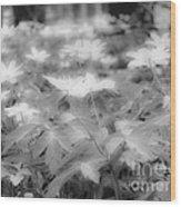 Between Black And White-14 Wood Print