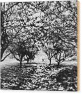 Between Trees II Wood Print