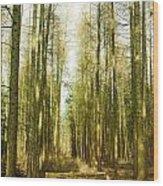 Betweenthe Trees Wood Print
